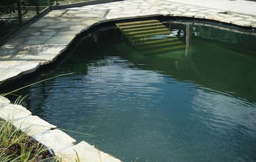 natuurlijke zwemvijver geels vijvertje
